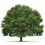 Kiedy potrzebne jest zezwolenie na wycinkę drzew? Część II