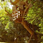 Hity końca XX wieku – słodycze, zabawy, domek na drzewie