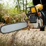 Kiedy potrzebne jest zezwolenie na wycinkę drzew? Część I